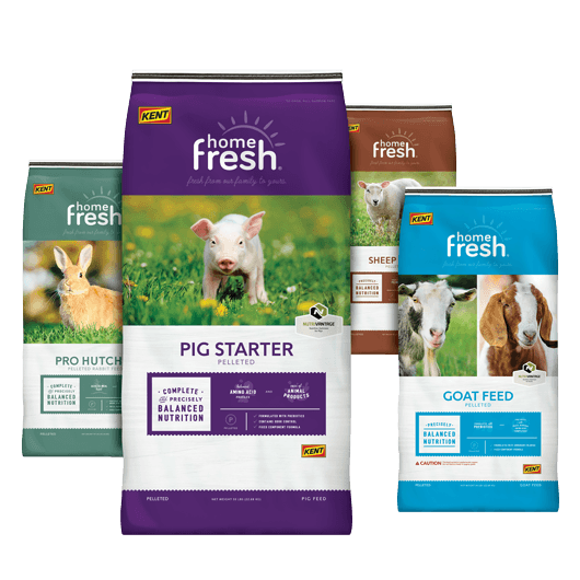 home fresh animal food